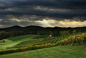 Three Sisters Vineyards in Dahlonega