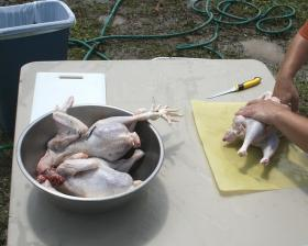 Chicken processing. (Note: This photo was not taken at East West Farm.)