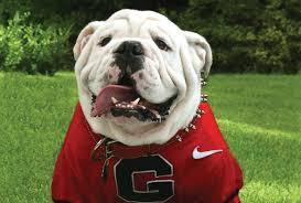 English Bulldogs have on the sidelines of UGA football games since 1956.