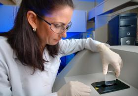 Laboratories at the CDC work with dangerous pathogens such as anthrax.
