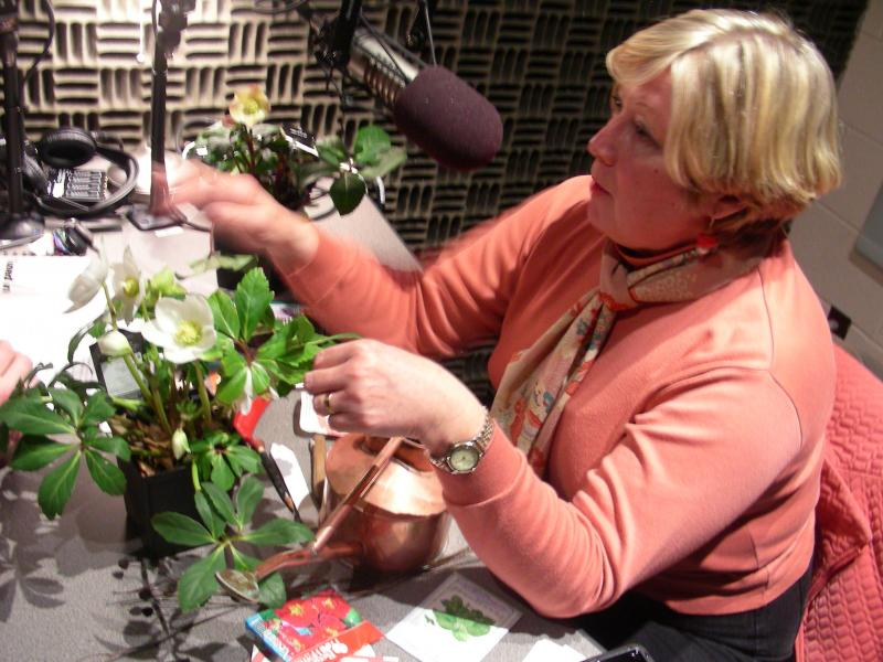 From the warmth of the WABE studios, Geri Laufer talks spring planting with John Lemley.