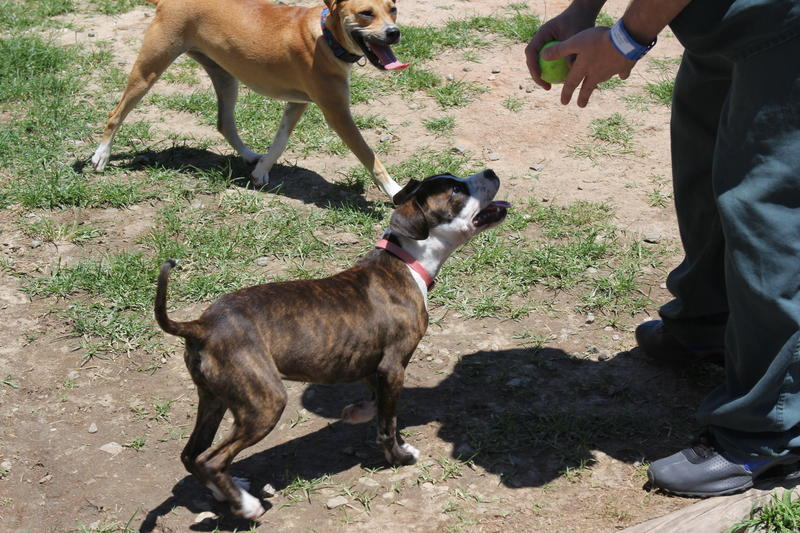 Outside, in a gated recreational yard, inmates can play fetch with the dogs off leash at the Gwinnett County Jail.