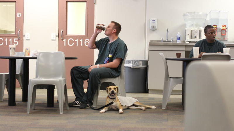 A dog takes a break at his handler's feet at the Gwinnett County Jail.