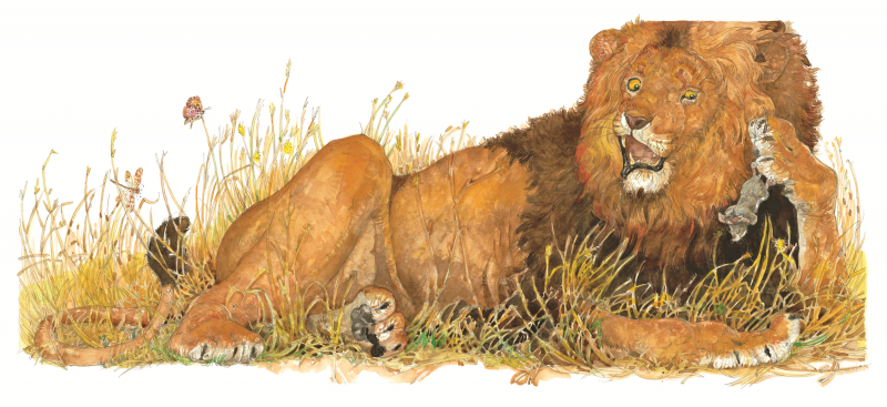 Grrr (Lion Picks Up Mouse) Illustration from The Lion and the Mouse, Jerry Pinkney, 2009.