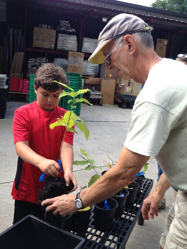 Thomas and Rich Sussman repotting Chestunt saplings