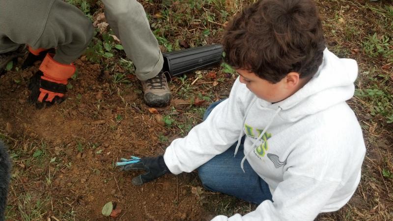 Thomas planting a chestnut sapling