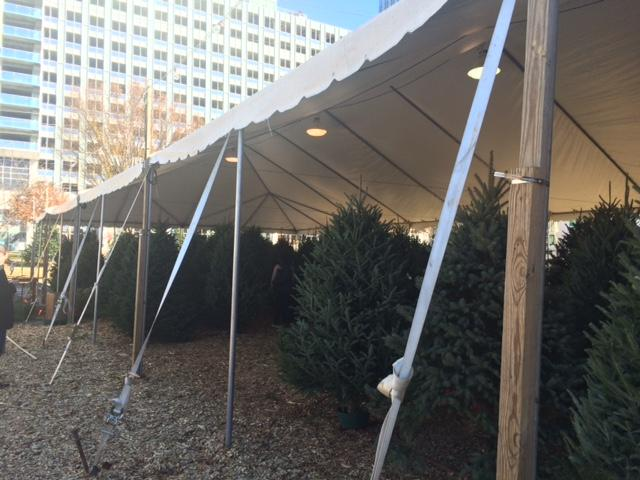 The holiday season has been unusually warm the past two years. Supplies of Christmas trees were still coming in the day before Thanksgiving here at Big John's Christmas Trees in Buckhead. Big John's owner expected the holiday weekend to be  a big one