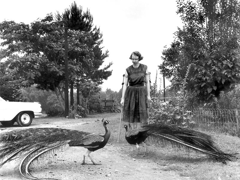 Flannery O'Connor on Andalusia Farm.