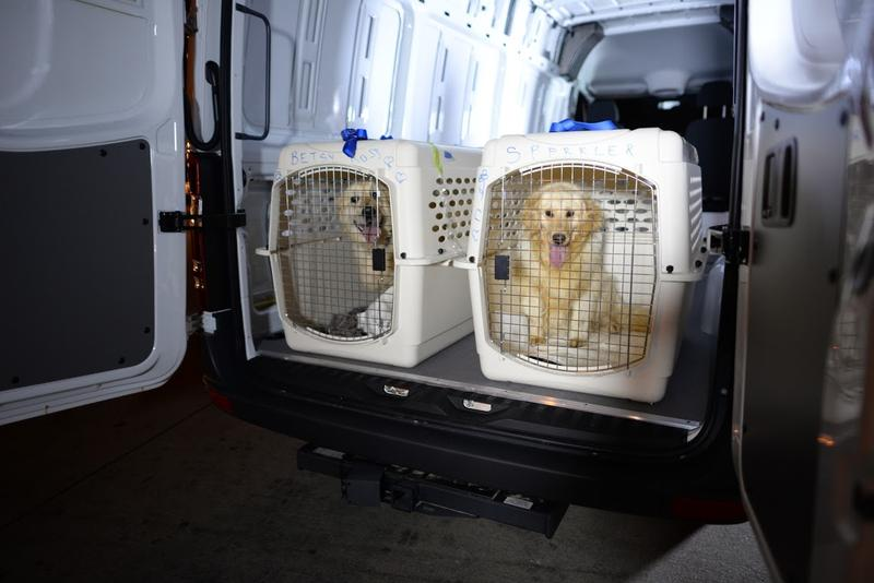 The dogs arrived at Hartsfield-Jackson International Airport late Saturday night after a 12-hour flight and seven-hour layover and were taken to Pet Lodge pet resort.
