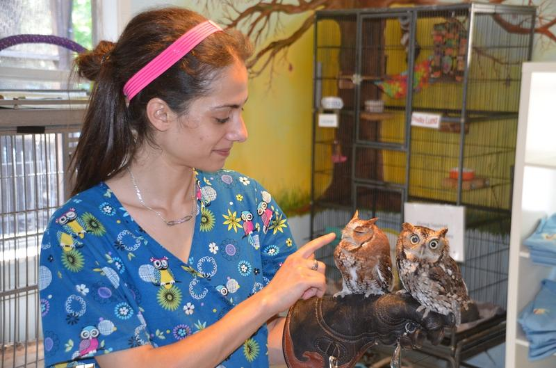 Wildlife Rehabilitator, Marjan Ghadrdan with owls Ellis and Cricket