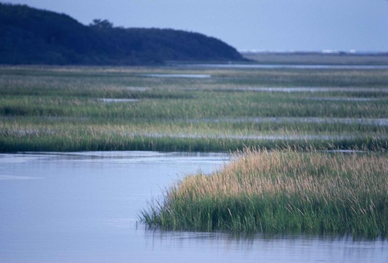 Georgia's coastal salt marsh is struggling, according to a recent study.