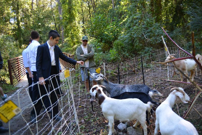Michael Swanson turned off the electric fence long enough to allow visitors to pet the goats.