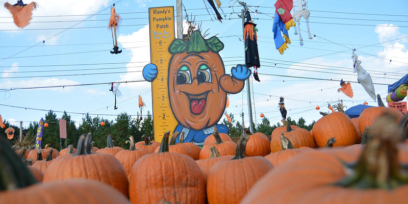 Producer Eboni Lemon goes pumpkin picking with Randy Kucera, owner and operator of Randy's Pumpkin Patch, on Monday's ''Closer Look.''