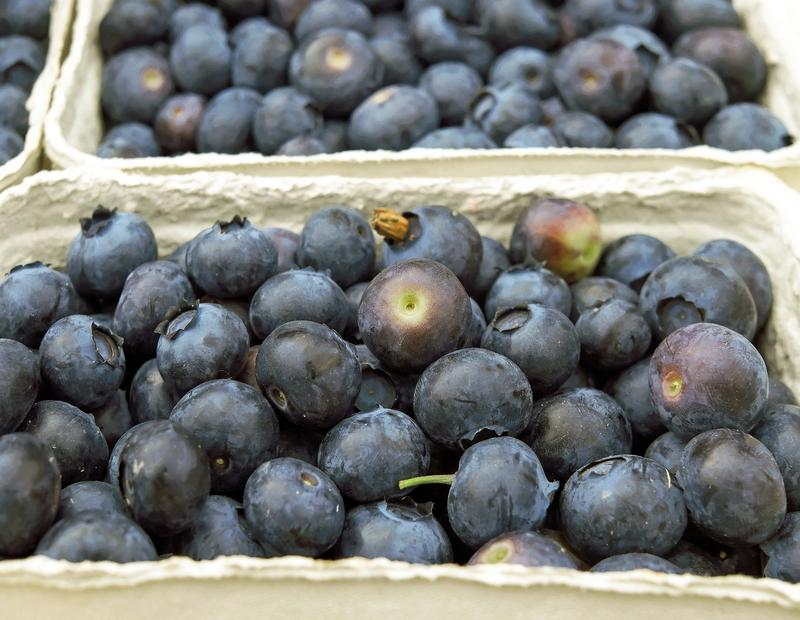 Blueberry crops in Georgia might be affected by this week's chilly weather.