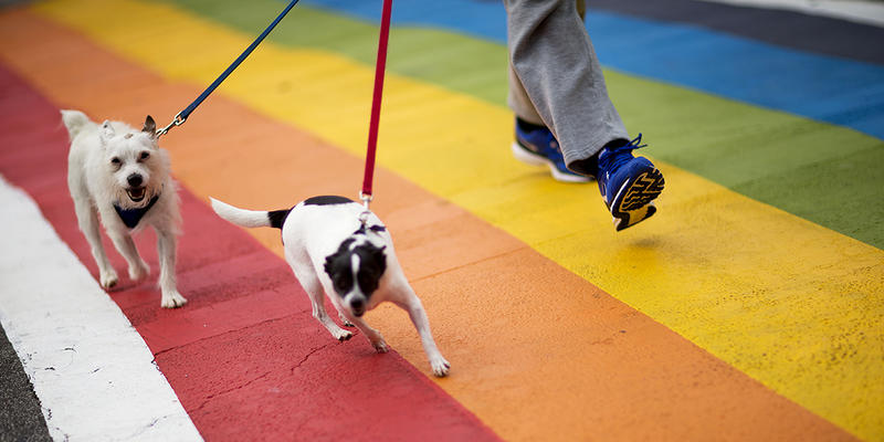 Petitioner Sarah Rose discusses her attempt to urge the city to make permanent rainbow crosswalks with the colors of the transgender pride flag in time for Pride month in June, today on ''Closer Look.''