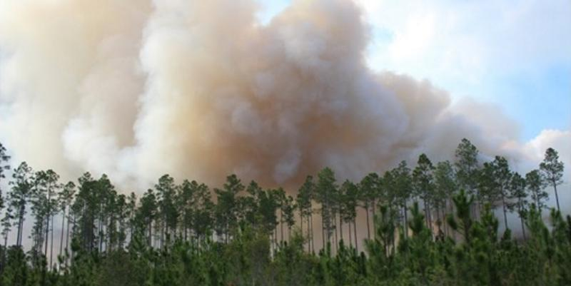 A wildfire was sparked by lightning on April 6, and is burning on the Okefenokee National Wildlife Refuge and adjacent public lands.