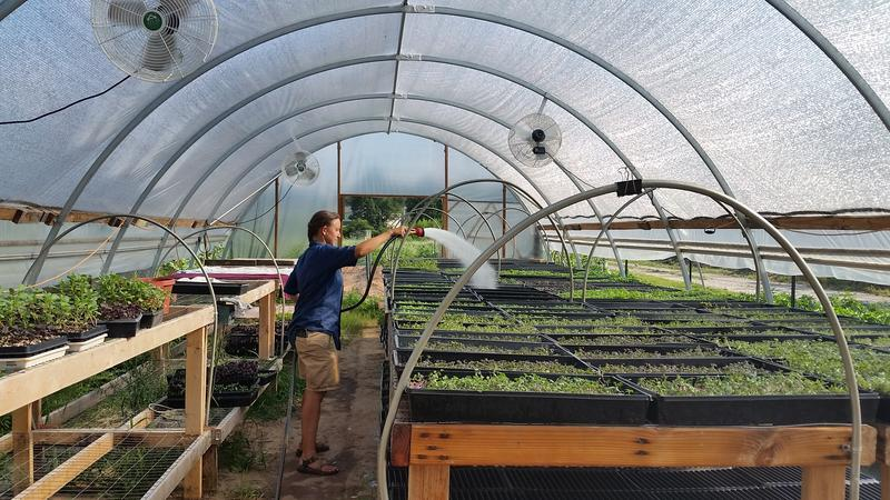 Andrea Ness, a co-owner of Aluma Farm, waters the microgreens grown in the farm's greenhouse.