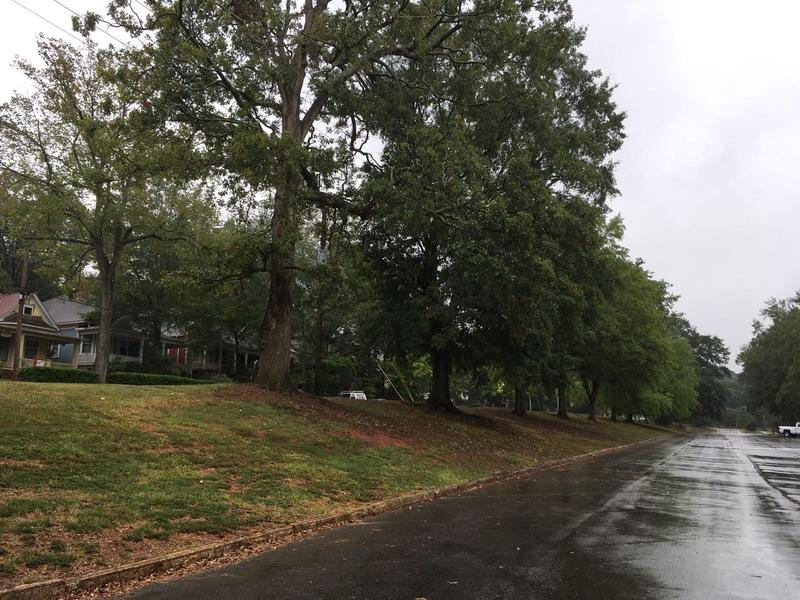 This row of trees on Boulevard Street will be cut down to make way for the new proposed parking deck.