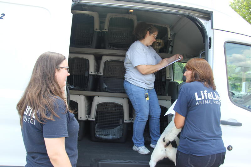 An animal transport arrives at the Avondale Shelter to take dogs to Pennsilvania where they have owners waiting for them.