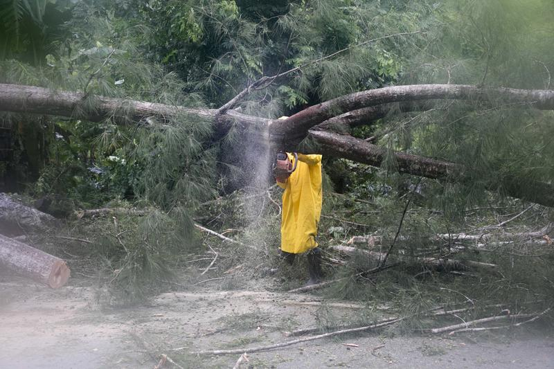 An employee from an electrical company works to remove a tree felled by Hurricane Irma, in Sanchez, Dominican Republic on Thursday.