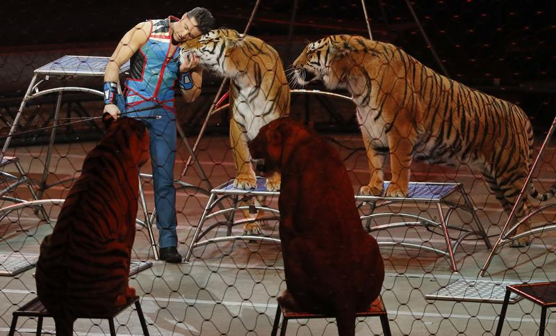 Big cat trainer Alexander Lacey is shown in May hugging one of the tigers during the final show of the Ringling Bros. and Barnum & Bailey Circus. On Wednesday, officials said a tiger owned by Lacey was killed after it escaped from a truck in Georgia.