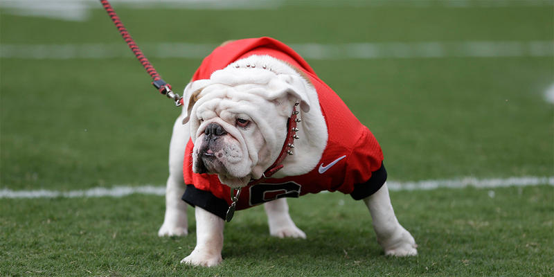 The Georgia mascot Uga takes the field before an NCAA football game against the LSU, Saturday, Sept. 28, 2013, in Athens, Ga.