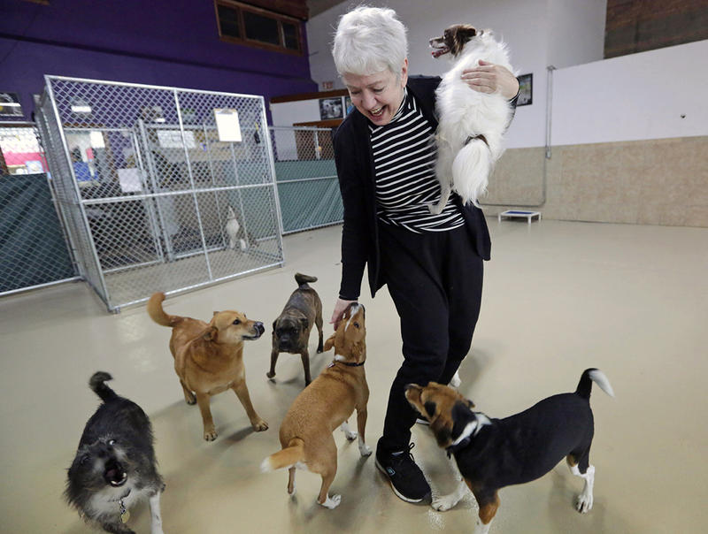 Beverley Petrunich, co-owner of DoGone Fun, a day care and boarding facility, visits with some of her clients in Chicago. Experts say doggie day care contributed to an epidemic of dog flu in Chicago that is spreading in the Midwest.