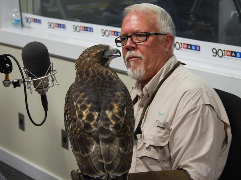 """Alan """"Smokey"""" Drury with Georgia Falconry Association holds his red-tailed hawk in the studio on Aug. 21, 2015."""