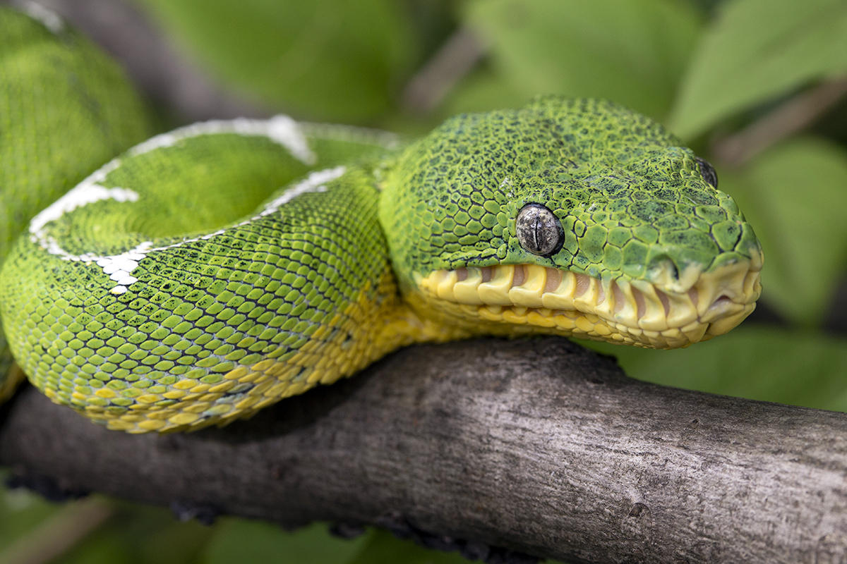Get Your Slither On At Zoo Atlanta S New Reptile House
