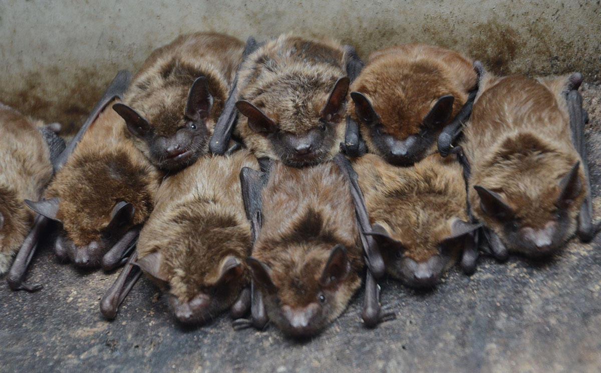 Bat 4 2 crack