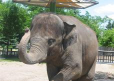 The fundraiser supports conservation efforts for animals in the wild like the Asian Elephant.