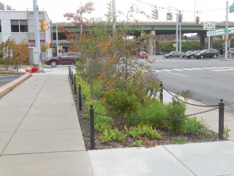 Rain garden on State St.