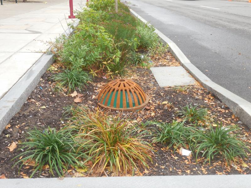 Overflow cap in rain garden on Harrison St. outside the OnCenter