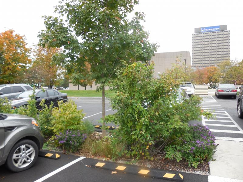 Biodetention basins in a parking lot gather rainwater from the sloped pavement