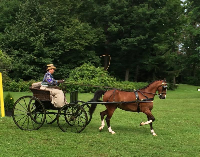 Horse and period carriage at Lorenzo Driving Competition