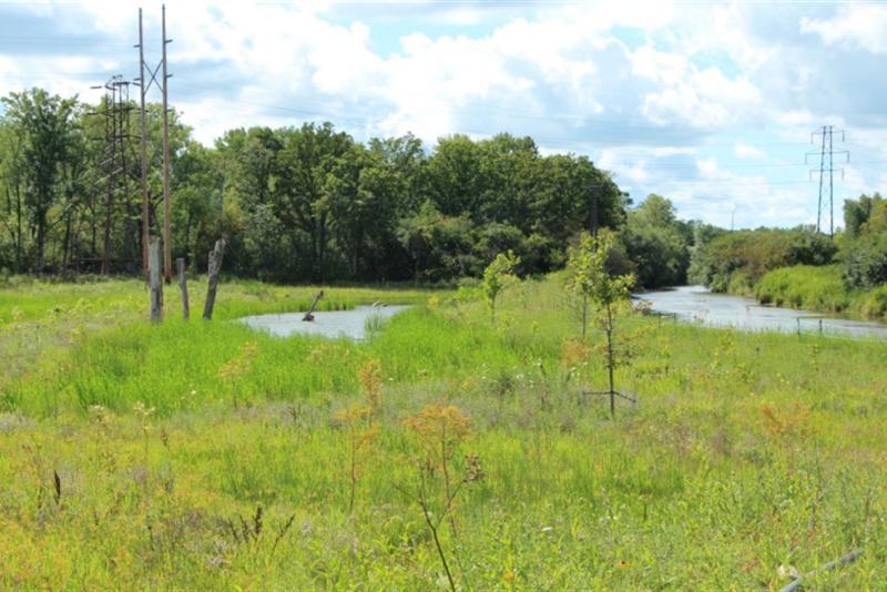 Closer look at Geddes Brook wetlands after restoration.