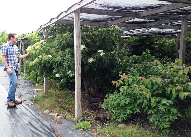 SU Garden Helps Biologists Test Hypotheses about Invasive Species ...