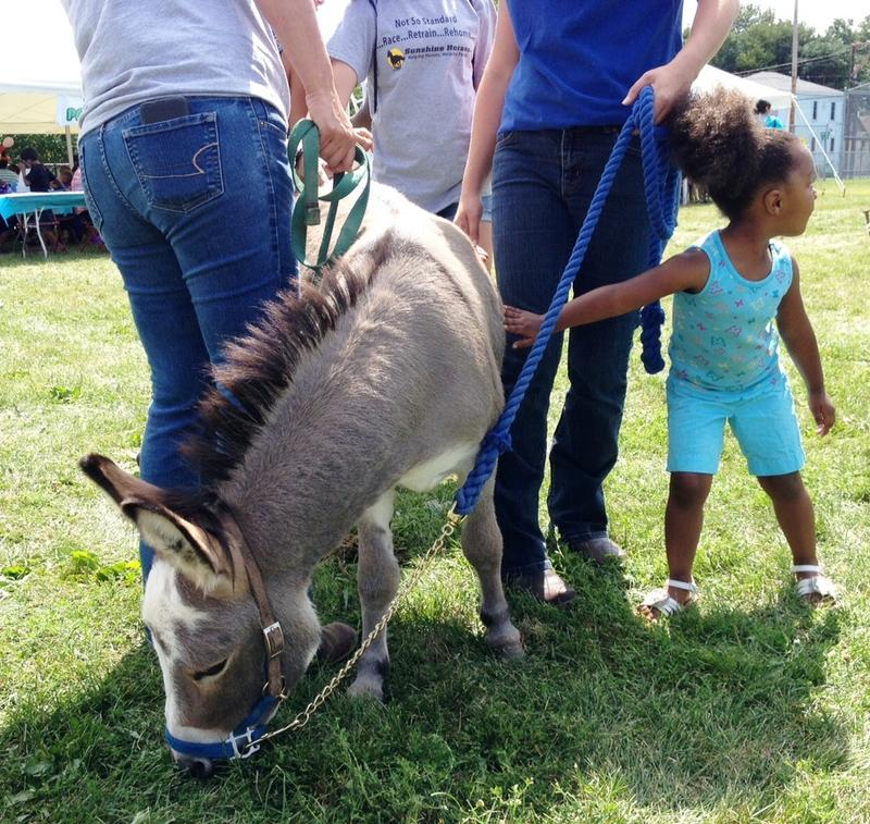 This miniature donkey drew some attention.