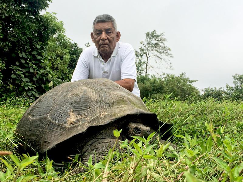 Giant Galapogos Tortoise:  Chelonoidis donfaustoi: Don Fausto with Eastern Santa Cruz Tortoise, Santa Cruz Island, Galapagos
