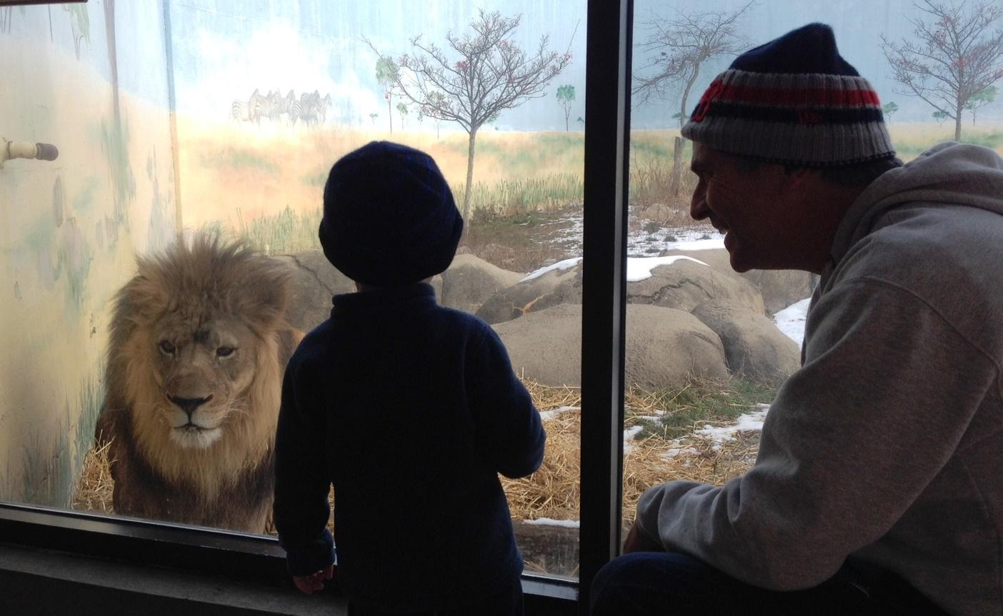 winter at the rosamond gifford zoo brings out the animals waer