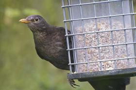Bird watching. - http://flic.kr/p/bzjXgN