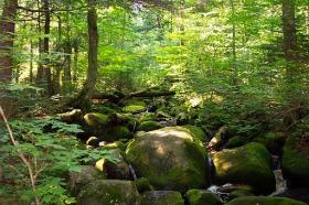 Dutton Brook on Ampersand Mountain in the Adirondacks
