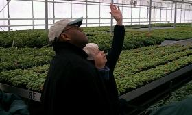 """US Senator William """"Mo""""Cowan (D-MA) is shown a greenhouse at Nourse Farm in Whately by co-owner Mary Nourse."""