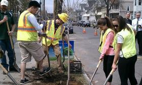 "Volunteers plant an Amelanchier or ""Serviceberry"" tree along Wilmont Street in the lower Forest Park Neighborhood of Springfield, MA.  The Earth Day event was sponsored by ReGreen Springfield and Western Mass. Electric Co."