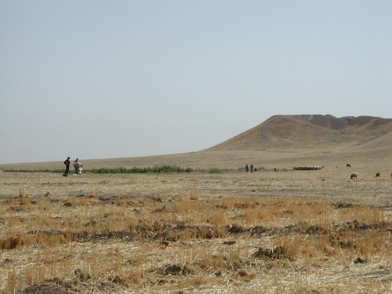 Archaeologists inspecting the surface of the mound at Tell Brak in northeastern Syria.  The mound is entirely artificial, an 8-million cubic meter accumulation over six millennia of human occupation.