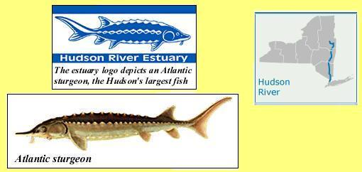 The Hudson River Estuary logo depicts an Atlantic sturgeon, the Hudson's largest fish. It highlights the estuary's critical role as habitat for valuable fish and wildlife and the need to be vigilant in protecting this natural heritage.