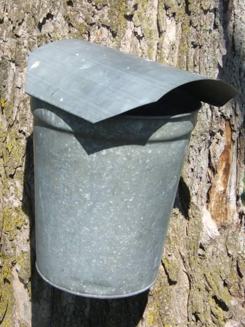Traditional maple sap bucket