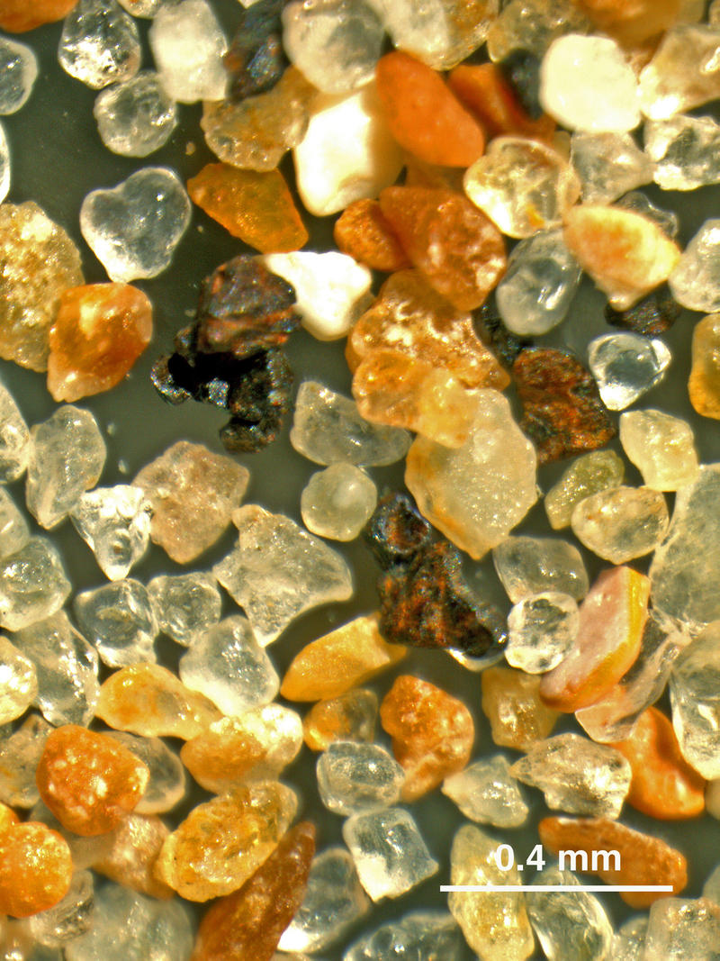 Omaha Beach sand seen through a binocular microscope. Pastel grains are carbonate rock fragments, carbonate skeletal grains, and iron-oxide coated quartz grains. Rust coated shrapnel grains are visible in the center. (Mean grain size = 0.2 mm.)