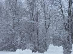 picture of trees in snow