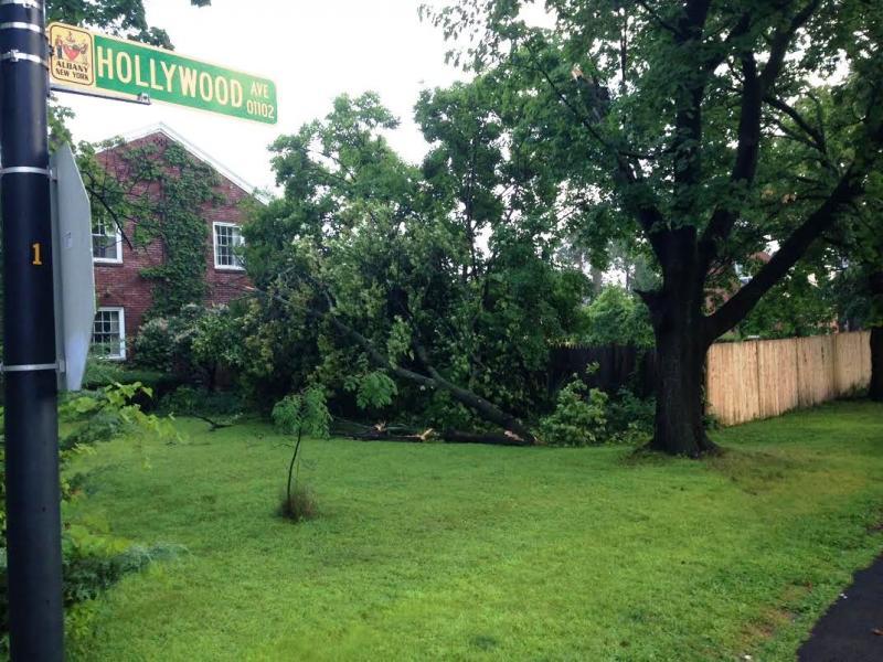 Tree down along Hollywood Avenue Albany